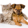 Cat hugging puppy — Stock Photo