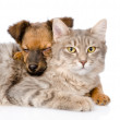 Mixed breed dog hugging cat. — Stockfoto