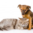 Puppy and cat. — Stock Photo