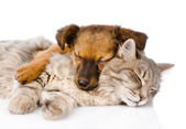 Cat and dog sleeping together. — Stock Photo