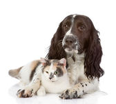 English Cocker Spaniel dog embraces a cat — Stock Photo