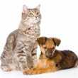 Puppy and cat together. — Stock Photo