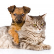 Mixed breed dog hugging cat. — Stock Photo