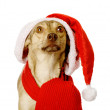 Dog in red christmas Santa hat — Stock Photo
