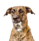 Hond houden een sleutels — Stockfoto
