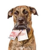 Dog holding a purse — Stock Photo