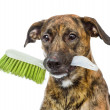 Dog with cleaning brush isolated on white background — Stock Photo #37383113