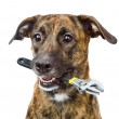 Dog with adjustable wrench isolated on white background — Stock Photo