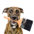 Dog with paint brush isolated on white background — Stock Photo