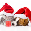 Scottish kitten and small puppy with santa hat isolated on white — Stock Photo