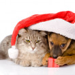 Cat and dog with santa hat and red box isolated on white background — Stock Photo