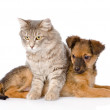 Cat and dog looking away isolated on white background — Stock Photo