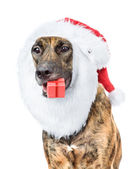 Dog with red christmas Santa hat and gift box isolated on white — Stock Photo