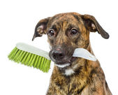 Dog with cleaning brush isolated on white background — Stock Photo