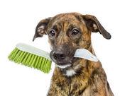 Dog with cleaning brush isolated on white background — Stock Photo