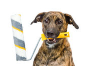Dog with paint roller isolated on white background — 图库照片