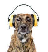 Dog with headphones for ear protection from noise isolated on white — Stock Photo