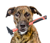 Dog with hammer isolated on white background — Stock Photo