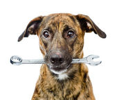 Dog with wrench isolated on white background — Stock Photo
