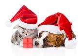 Skotský kotě a malé štěně s santa hat izolované na bílém — Stock fotografie