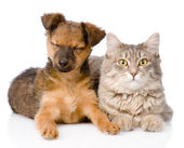 Puppy and kitten together isolated on white background — Stock Photo