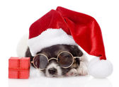 Cute puppy with red gift box and santa hat. Isolated on white background — Stock Photo