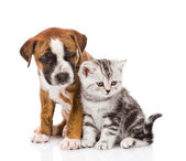 Scottish kitten and puppy looking away. Isolated on white background — Stock Photo
