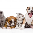 Group of cats and dogs sitting in front. — Stock Photo