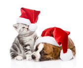 Scottish kitten and small puppy with santa hat — Foto Stock