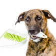 Dog with brush and dustpan. — Stock Photo #37749943