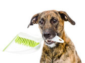 Dog with brush and dustpan. — Stock Photo