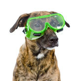 Dog with protective goggles. — Stock Photo