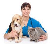 獣医ハグ猫と犬. — ストック写真