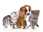 Cats and dog in front — Stock Photo