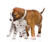Puppy hugs scottish kitten — Stock Photo