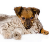 Dog and cat sleeping — Stock Photo