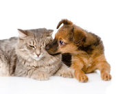Dog kisses cat. — Stock Photo