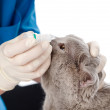 Foto de Stock  : Veterinariand kitten in clinic