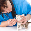 Cleaning nose kitten in a veterinary clinic. — Stock Photo