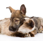 Mixed breed puppy and cat together. — Stock Photo