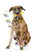 Dog with paint roller. — Stock Photo