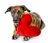 Dog with a red heart — Stock Photo