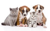 Cats and dogs — Stock Photo