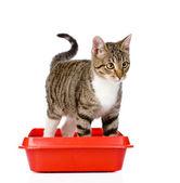 Kitten in red plastic litter cat. — Stock Photo
