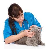 Vet examining a cat's ear. — Stock Photo