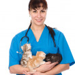 Vet holds three kittens. — Stock Photo