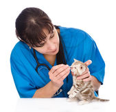 Checking eyes of cat in veterinary clinic. — Stock Photo