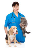 Dog and cat at the veterinary check up — Stock Photo
