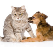 Dog bites cat. — Stock Photo