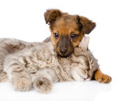 Dog and cat sleeping. — Stock Photo